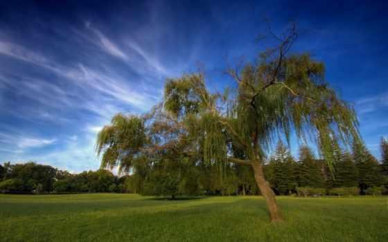 free, фотообои, дерево