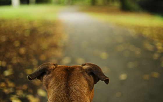 anime, настороженность, уши, дорога, park, сияние, широкоформатные, id, naruto, canin,