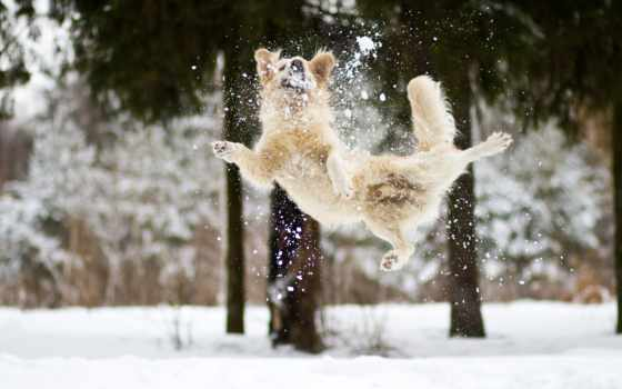 winter, снег, собака, настроение, собакой, радость, зимой, настроения, дек, зимы, тоже,