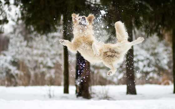 winter, снег, собака Фон № 139571 разрешение 1920x1273
