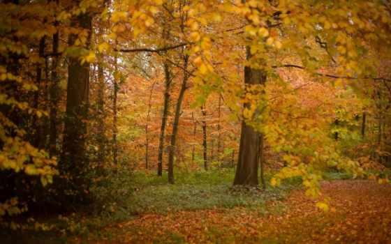 осень, slide, показать, природа, parte, naturaleza, телефон, золотая,