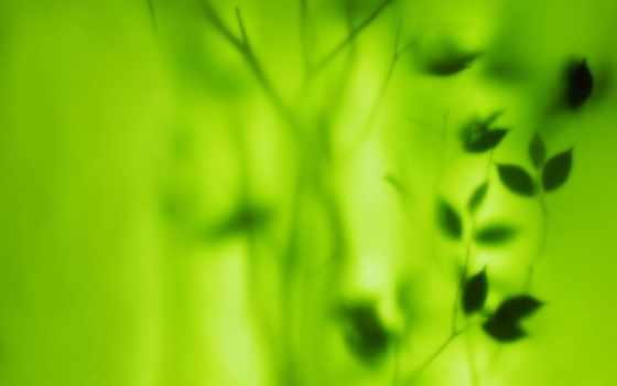 зелёный, color, coupe, фотопечатью, шкафы, очки, желто, интерьере, лист, каталог, воронеже,