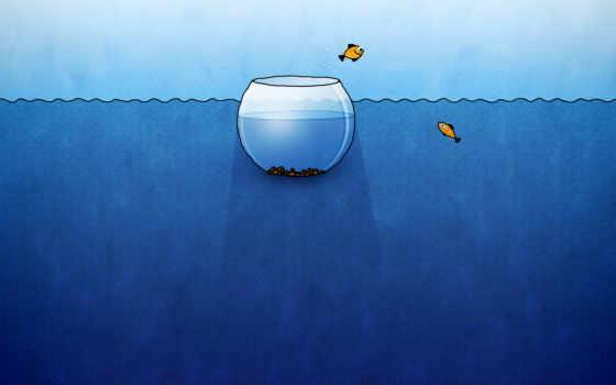 аквариум, рыбы