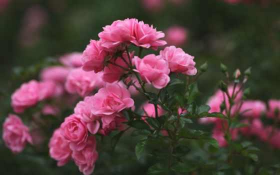 розы, марта, сегодня