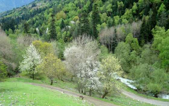 весна, мар, природа