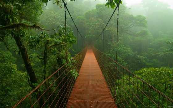 мост, джунглях, подвеска, природа, амазонских, амазонки, корабль,