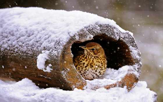 winter, катаклизмы, птицы, are, animal, zhivotnye, снегу, you,