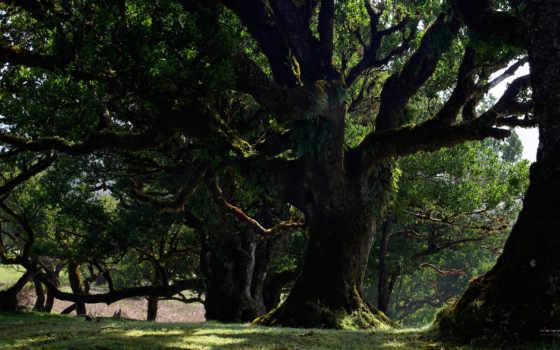 природа, деревья, wallpapers, обоев, wallpaper, hd, картинка, рисунки, красивые, лес, природы, путешествуя, миром,