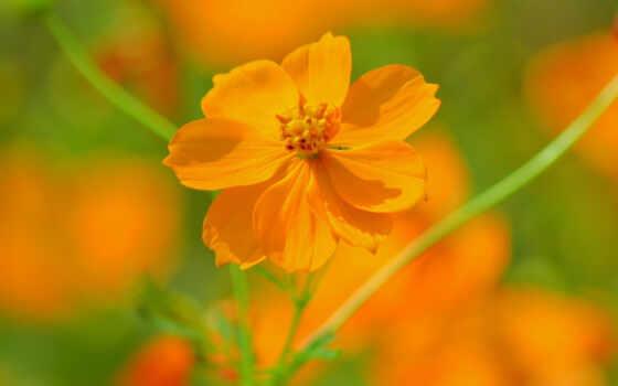 цветы оранжевый Фон № 14745 разрешение 1920x1200