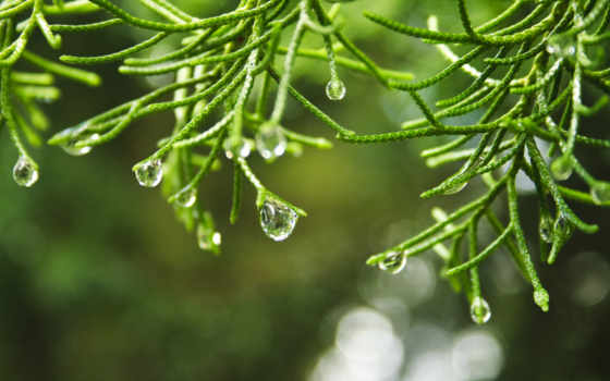 nature, macro, raindrops, style, dew, summer, trees, depth, field, code, you, this, met, are, landscapes,