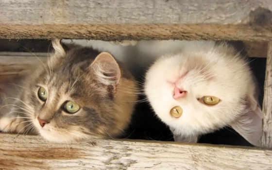 кошки, kitty, кот