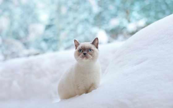 кот, снегу, снег, white, клипарт, winter, rylik, картинка,