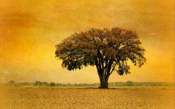 дерево, herring, зелёный, поле, hill, одинокий, imogen, poot