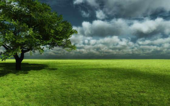 nature, afternoon, wiese, , ein, nu, garden, meadow,