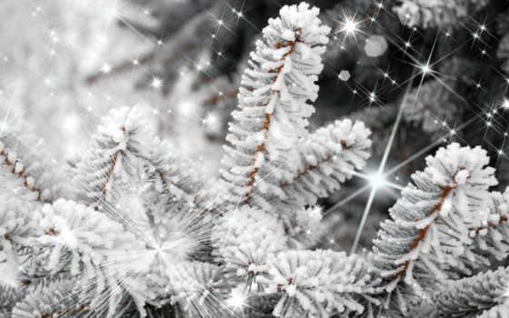 дерево, снегу, winter