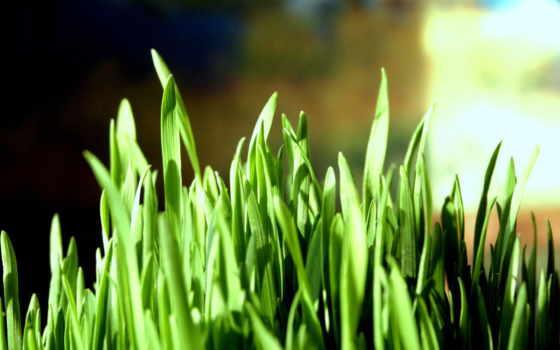 трава, можно, эти