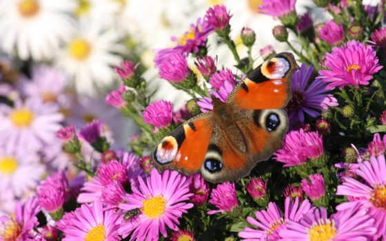 flowers, цветы, бабочка