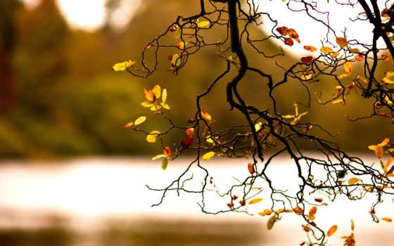 осень, природа, листва, branch,