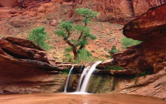природа, живая, красивая,