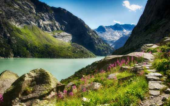цветы, горы, река, ущелье, солнечно, камни, небо,