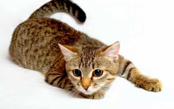 кот, качества, aliexpress, кошек, отличного,