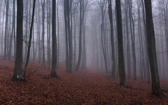 лес Фон № 45879 разрешение 2560x1600