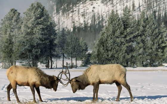 природа, зимние, сообщения
