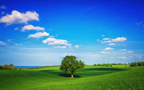 трава, поле, дерево
