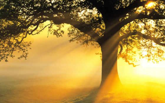 свет, красавица, sun, rays, дерево, поле, ветви, солнечный, светильники, природа, листва,