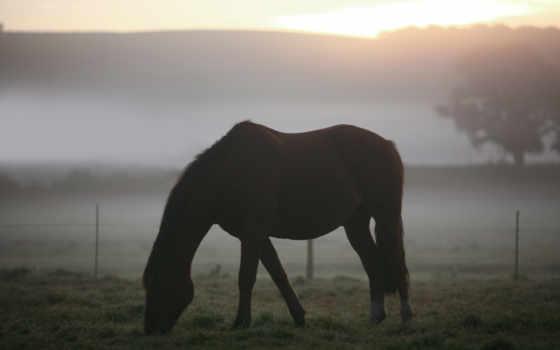 туман, утро, кони, поле, zhivotnye, трава, пастбище, лошади, пейзажи -,