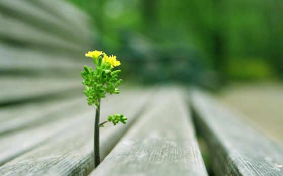 росток, пробившийся, между, скамейки, mbc, пробивается, contest, досок, organic, природа, сочная,