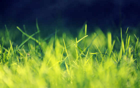 mac, трава, ноутбук, best, desktop, свет,