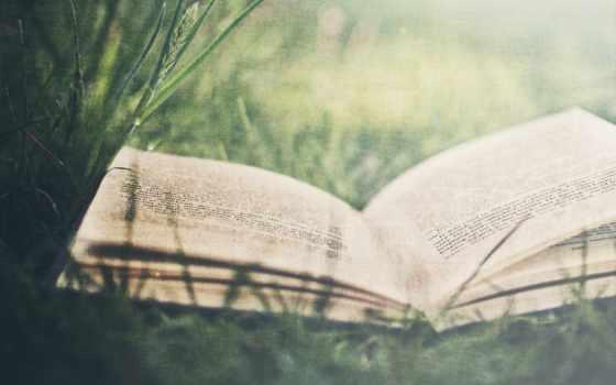книг, книга, книгами, книги, martha, статьи, новости, график, more, сорта,