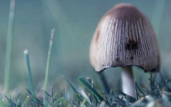гриб, несъедобный