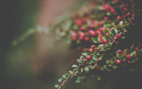 красные ягоды на ветке с листочками ...