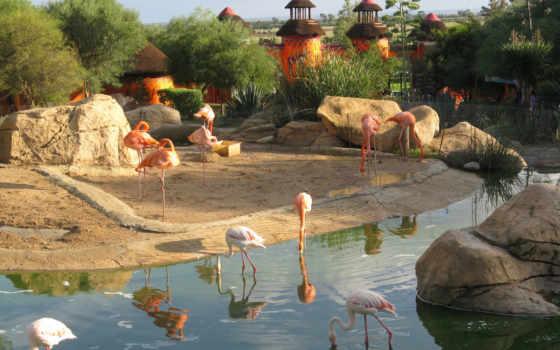 категория, добавлено, графика, фламинго, животные, club, oaza,