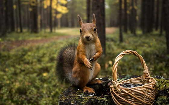 белки, корзина, stump, природа, zhivotnye, семечки, белочка, лес, трава, картинка,