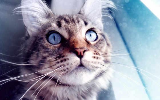 красивых, кот