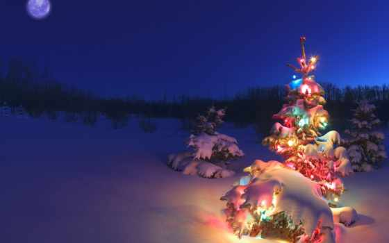 елка, christmas