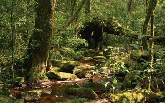 лесу, лес, три