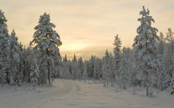 winter, испарение, утро