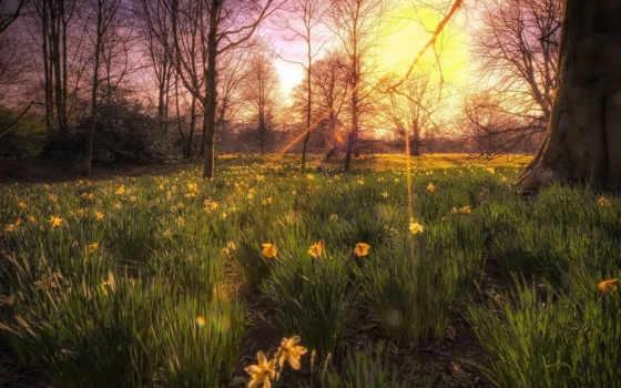 красивые, солнца, цветы