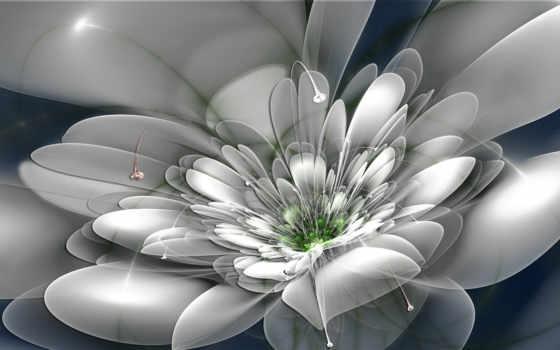 tapety, grafika, pulpit, kwiat, biały, images, darmowe, цветы, abstrakcja,