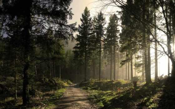 лес, природа, солнечный, trail, sun, wpapers, свой, совершенно,