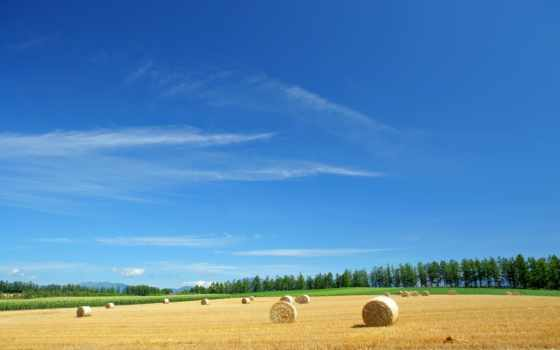 tapety, japonia, сено, країна, kwitnącej, pole, pulpit, поле, ферма,