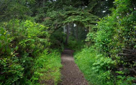 trees, арка, трек, берег, кусты, лес, national, тропинка, зелёный, листва, скалы,