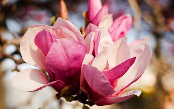 цветы, широкоформатные, красивый, невероятно, розы, букет, красивые, большой, мар,