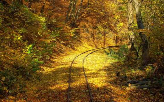 дорога, железная, осень, лес, листопад,