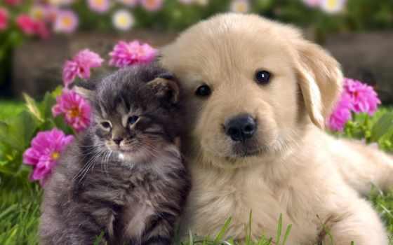 animal, pet, собака, pets, animals, кот, информация,