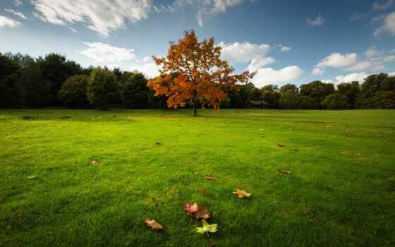осень, природа, качество, landscape, resolution, youtube, канал, wetland, сено, permission